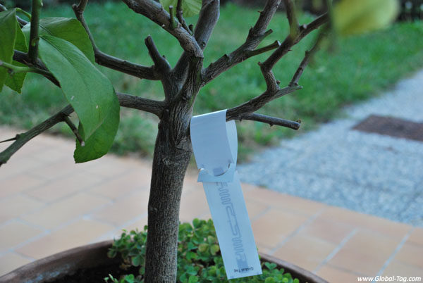 RFID tag for plants